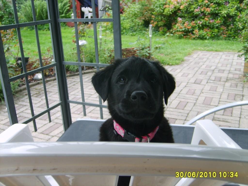 Dygtig er jeg, hopper op på stolen nu .5 uger Juni 2010