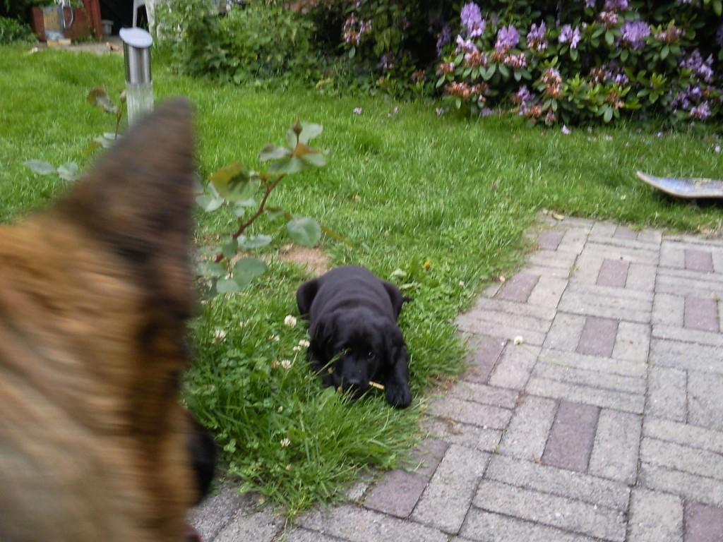 Lady holder øje med Schanta