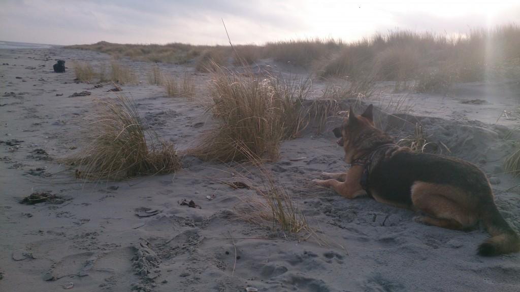 Lady og Schata på Stranden 24 december 2015