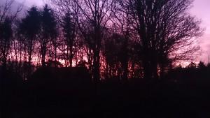 Morgensol i Februar