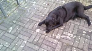 Schanta efter besøg ved dyrelæge