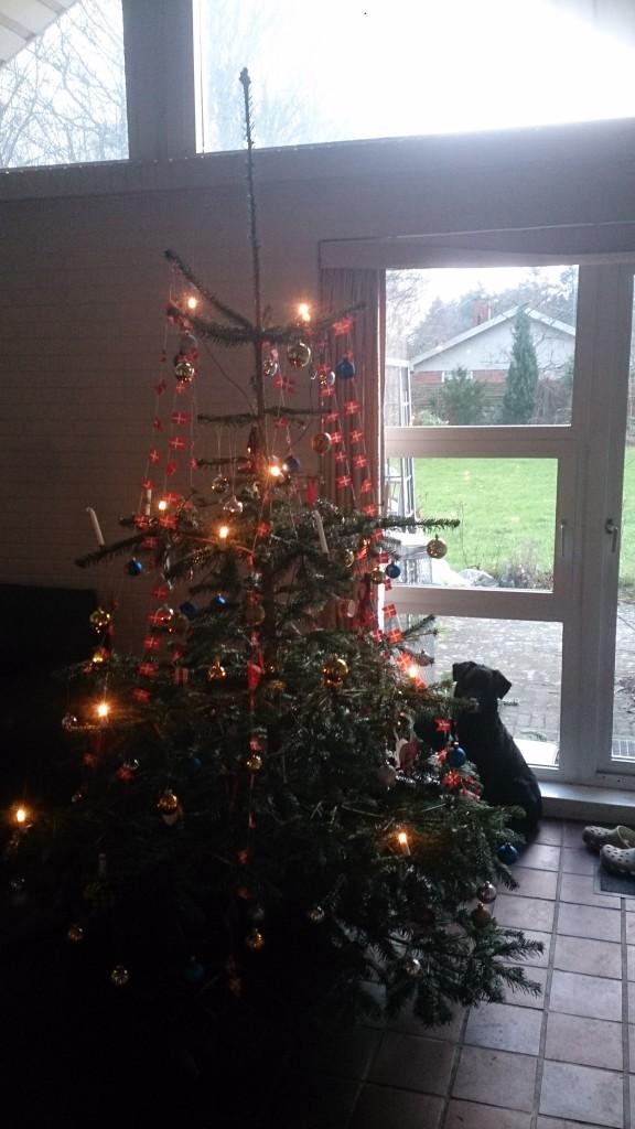 Schanta og Juletræ 2015