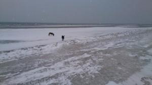 Sne og gråt på Stranden 16-01-2016