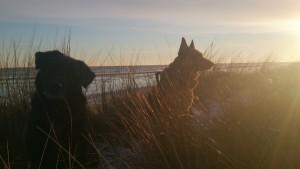 Sol og Blå Himmel 15-01-2016