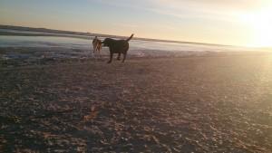 Sol på Stranden 15-01-2016