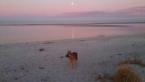 Lady månestråle