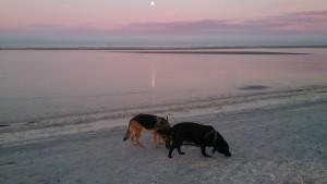 Lady og Schanta i måneskin