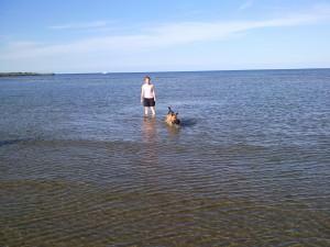 Allerede vandhund allerede en vandhund sammen med Lady