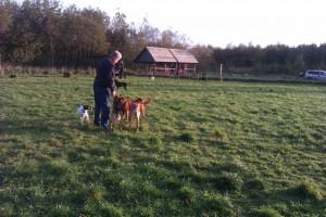 Hundeskoven og Arne med hundekiks
