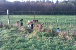I Hundeskoven Bannerslund