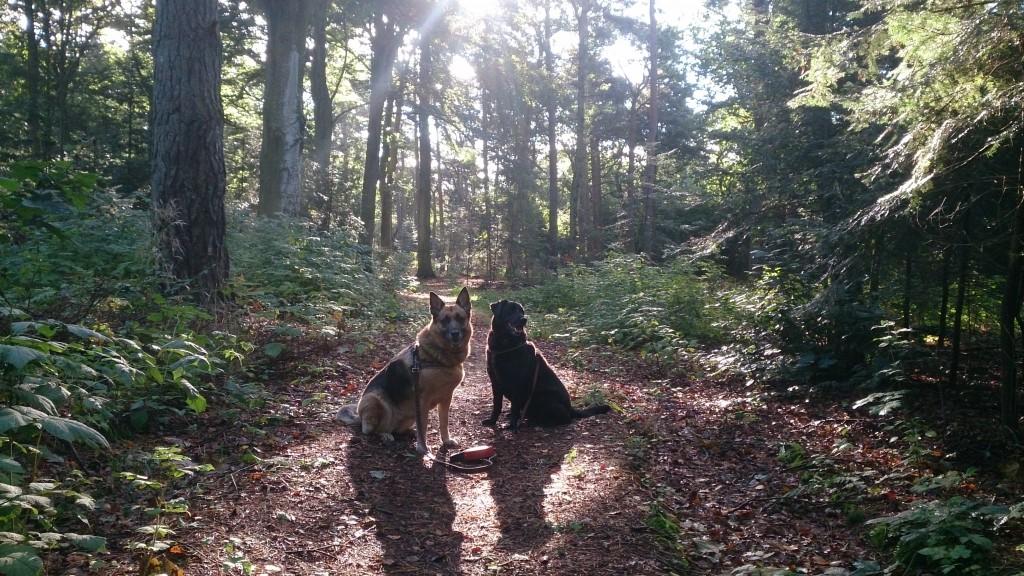 Lady Og Schanta Oktober i Skoven