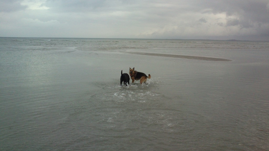 Lady og Schata på stranden 31-10-2013