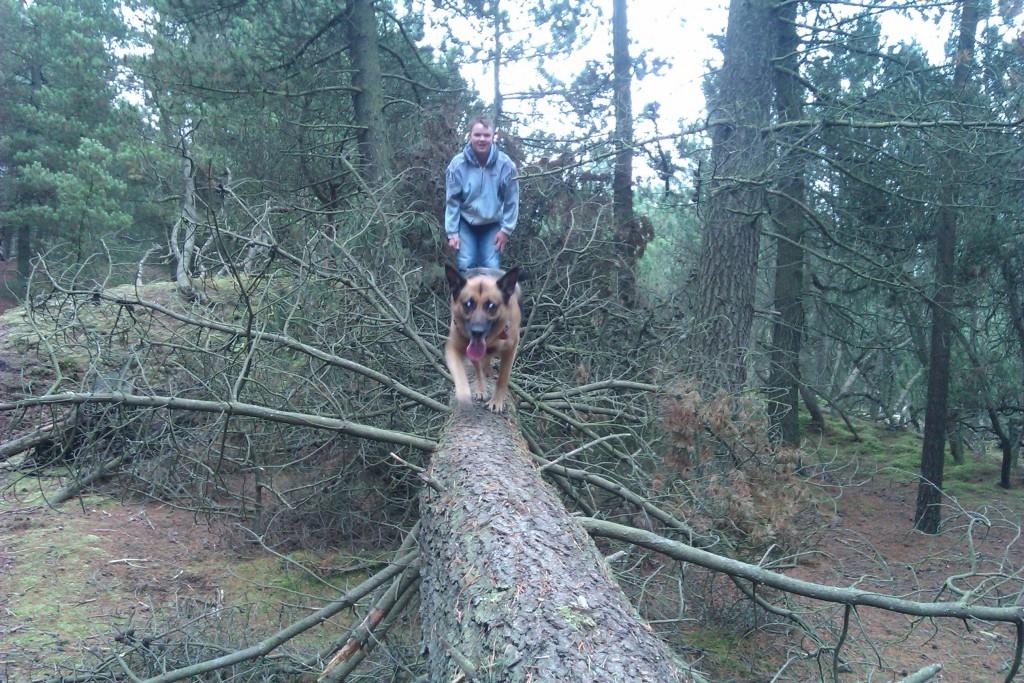 Lady på træ