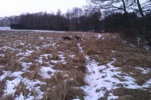 Tur langs åen vinter 2012