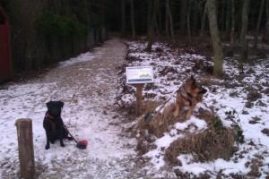 Venter på tur i Elling Plantage Februar 2012