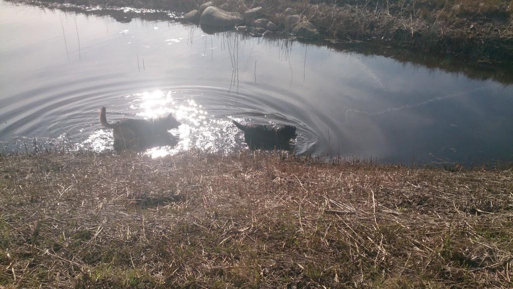 Sol Sø Forår og hunde